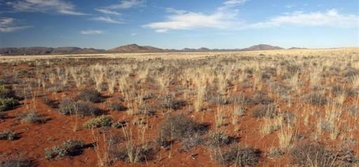 visuel-Namaqualand