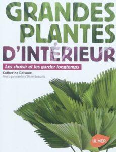 Botanique la canne du muet le blog d 39 ombres blanches for Grandes plantes vertes